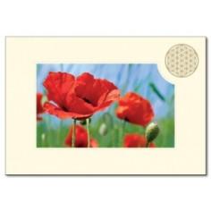 Klappkarte Blume des Lebens Mohnblume rot