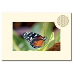 Klappkarte Blume des Lebens Schmetterling