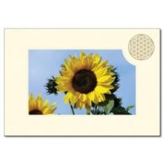 Klappkarte Blume des Lebens Sonnenblume