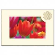 Klappkarte Blume des Lebens Tulpe
